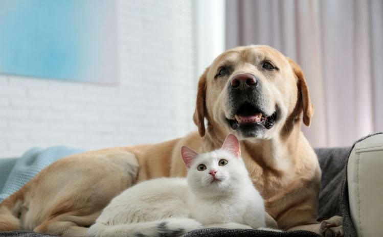 Cat and Dog Laws
